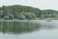vogel-brutstaette-bauen-flussseeschwalben-oberhausen